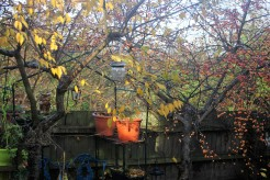Autumn leaves and crab apples