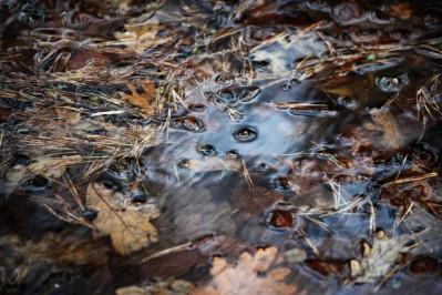 Waterlogged leaves