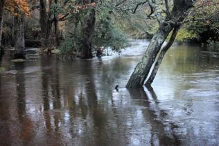 River Lymington in spate