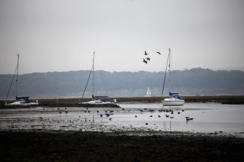 Brent geese ? and boats