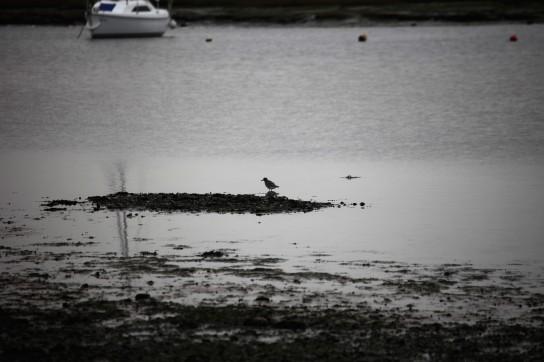 Wading bird