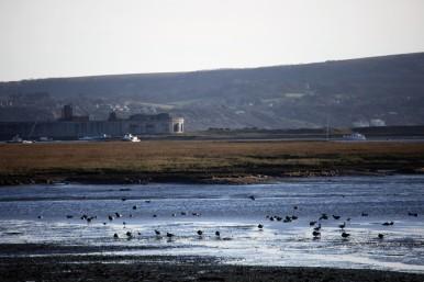 Waterfowl, Hurst Castle, Isle of Wight
