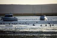Waterfowl, boats