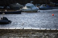 Gulls and buoy