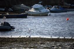 Gulls and buoy