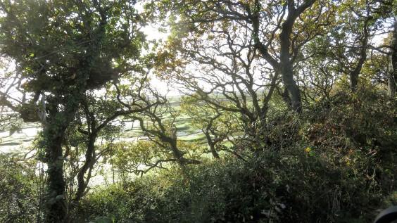 Sea through trees