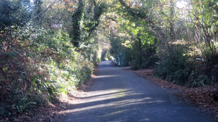 Barnes Lane