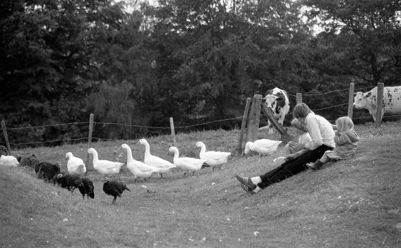 Matthew, Sam, Louisa, cattle and farmyard fowl