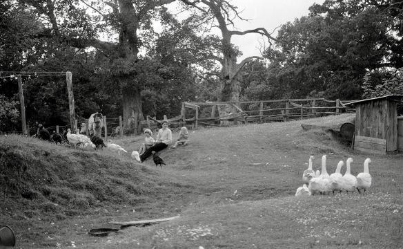 Matthew, Sam, Louisa, farmyard fowl 1985
