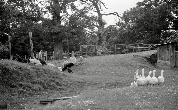 Matthew, Sam, Louisa, farmyard fowl 1985