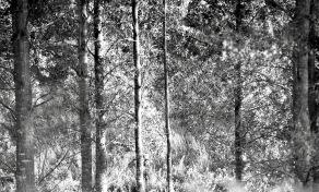 Woodland 9.85