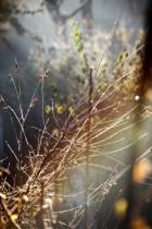 Frost on twigs