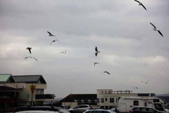 Gulls over car park