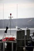 gulls on posts