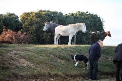 Ponies and dog
