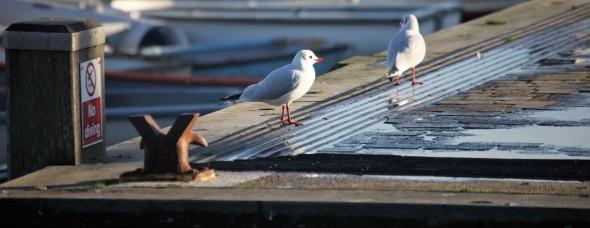 Gulls on quay