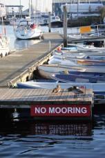 Mallards and boats
