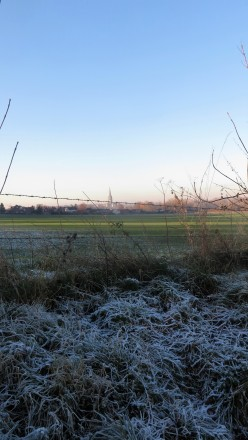 Frosted grass and Salisbury Cathedral