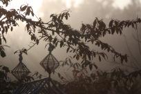 Misty garden 6