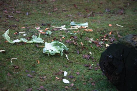 Vegetable scraps