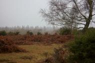 Misty moor 2