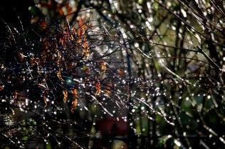 Raindrops on autumn shrub