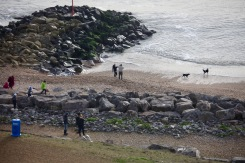 Groups and dogs on beach 1