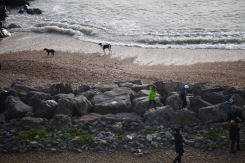 Groups and dogs on beach 3