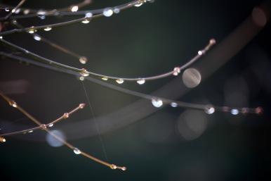 Raindrops on twigs 1