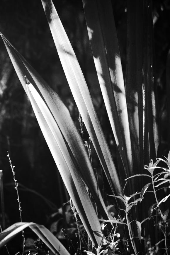Leaves B/W