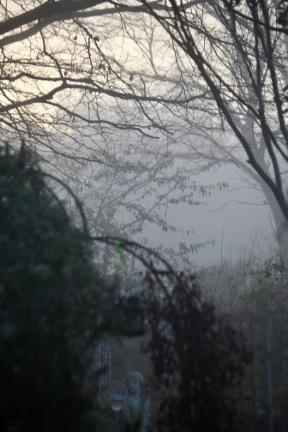 Misty garden 1