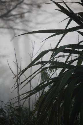 Misty garden 2