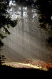 Forest sunlight shafts 2
