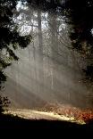Forest sunlight shafts 2