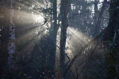 Forest sunlight shafts 4