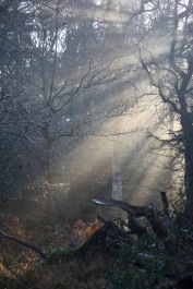 Forest sunlight shafts 5