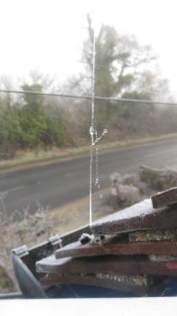 Frost melting on cobweb