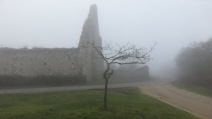 Tree and St Leonard's Grange in fog