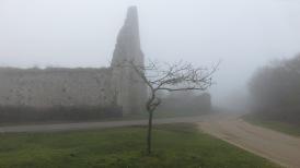 Tree and St Leonard's Grange in fog