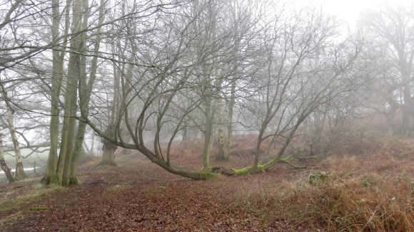 Trees in mist 2