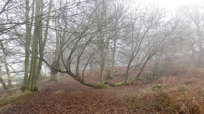 Trees in mist 2