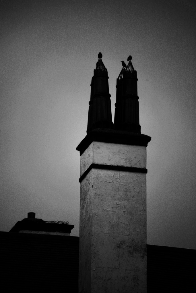 Starlings on chimney tops 1