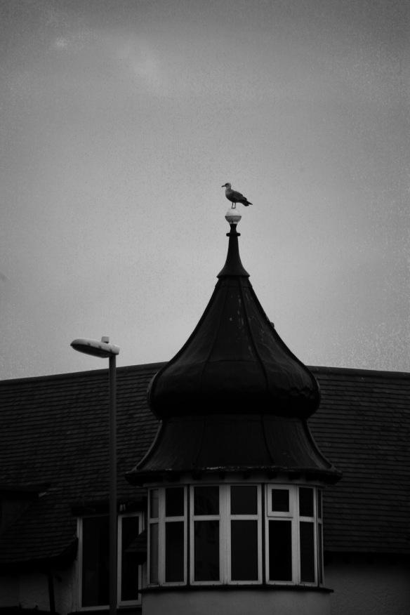 Gull on pinnacle