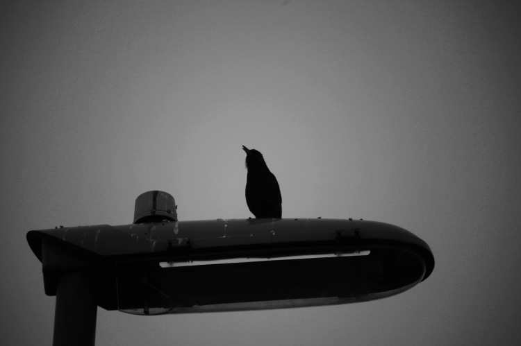 Starling on bus stop
