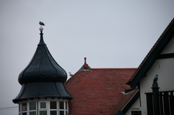 Gulls and decoy bird of prey