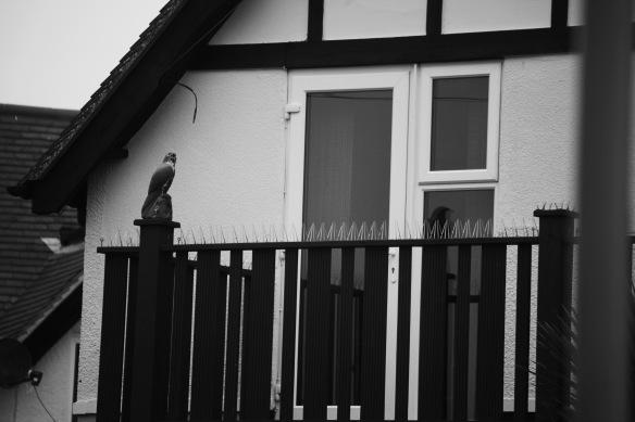 Bird of prey decoy and spiked balcony