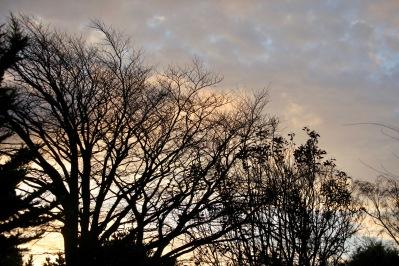 Skies at Dawn 1
