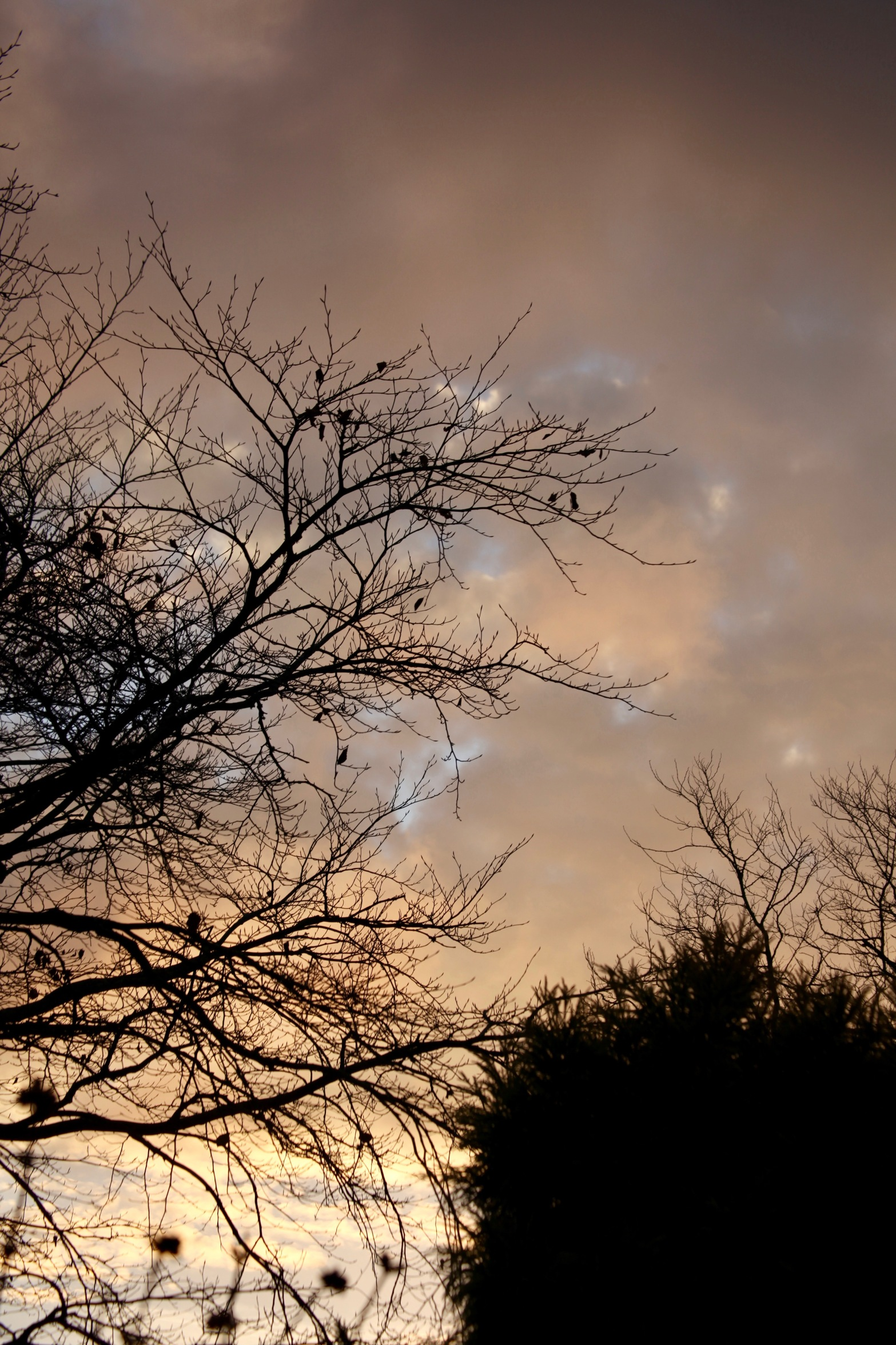 Skies at dawn 3