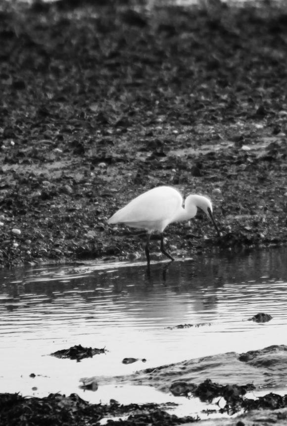 Egret 6