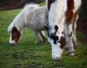 Ponies 5
